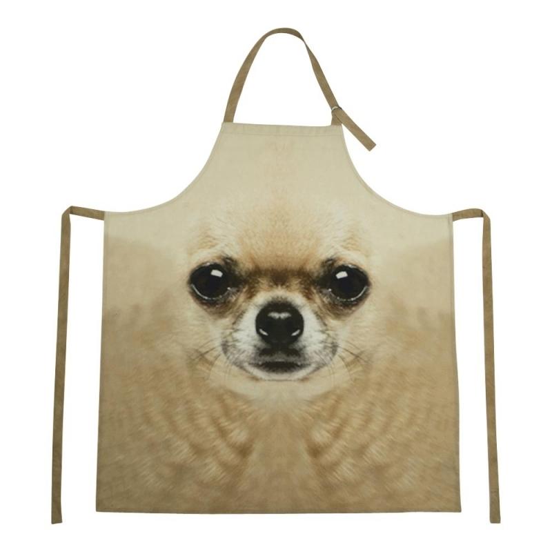 Schort Chihuahua hond